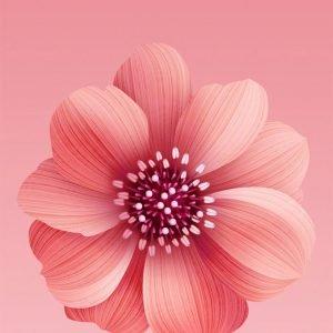 Xiaomi Mi 6X Stock Wallpapers